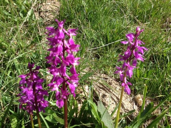 fleurs et plantes orchidée sauvage