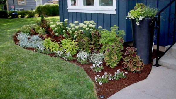 fleurs et plantes parterre de vivaces
