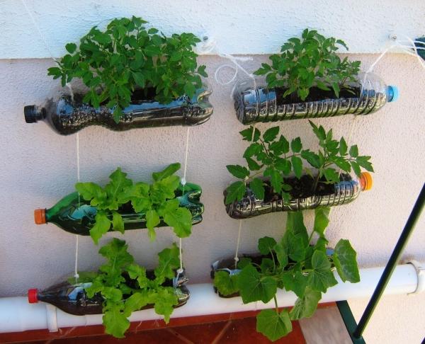 fleurs et plantes potager vertical