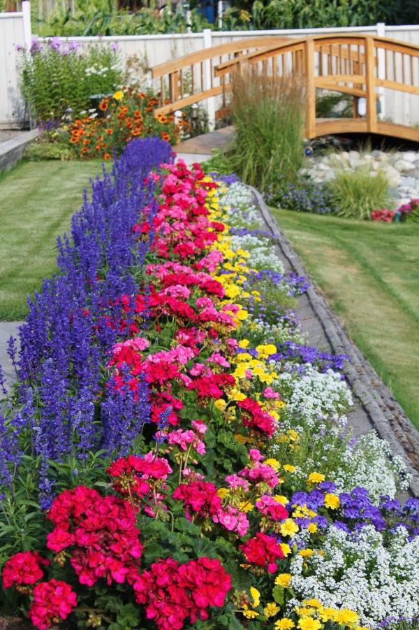 fleurs et plantes un parterre de fleurs magnifique