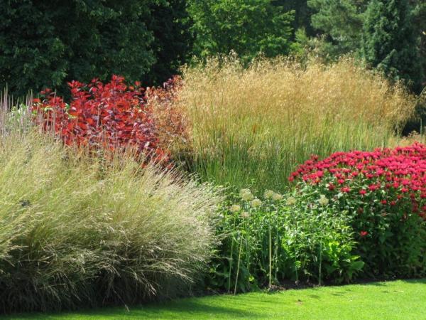 graminées vivaces végétation abondante