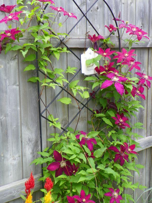 idée déco florale comment habiller un mur extérieur abîmé plante clématite