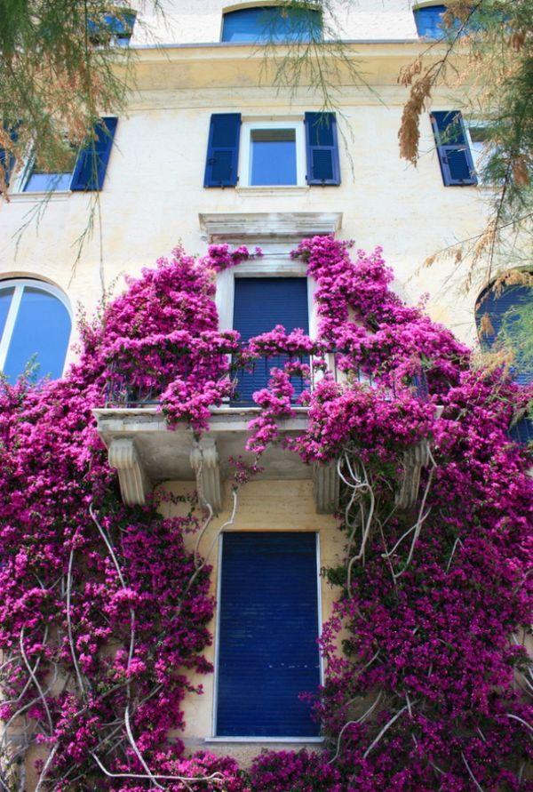 idée magnifique de déco avec bougainvillier plante grimpante comment habiller un mur extérieur abîmé