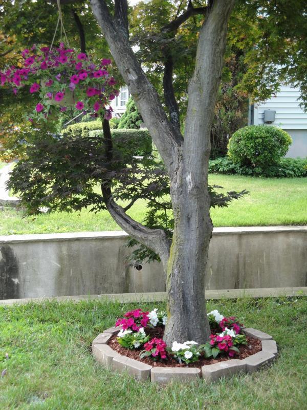 parterre de fleurs autour un arbre