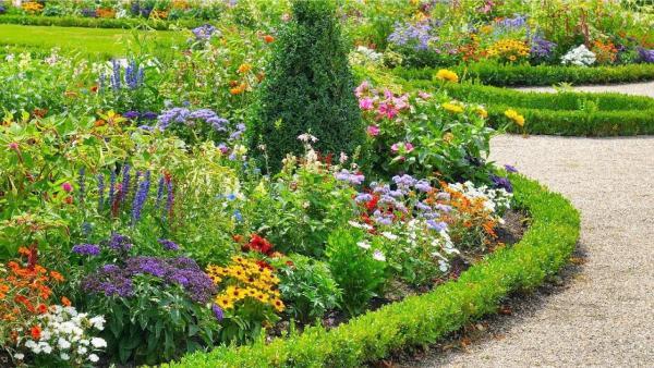 parterre de fleurs avec bordure verte de plantes