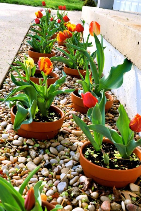 parterre de fleurs avec pots et cailloux