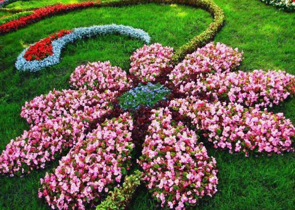 parterre de fleurs en forme de fleur