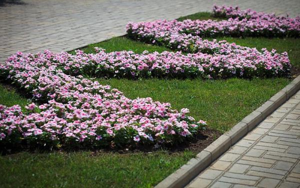 parterre de fleurs en forme géométrique