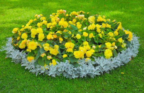 parterre de fleurs forme ovale