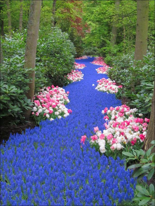 parterre de fleurs jacinthes et tulipes