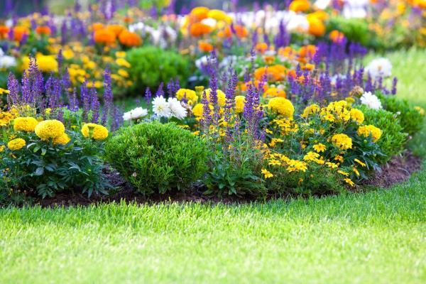 parterre de fleurs sans bordure