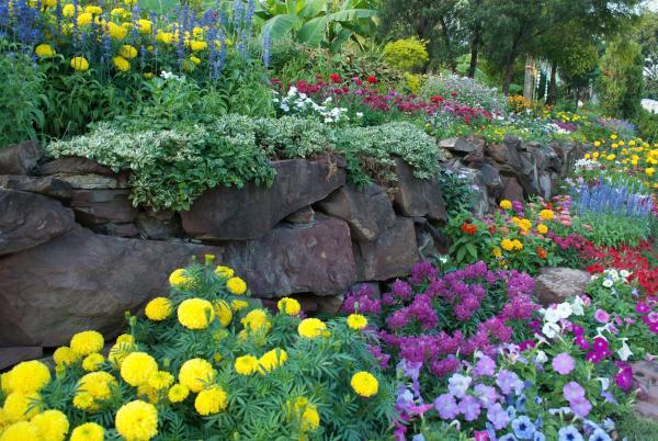 parterre de fleurs terrasse de rocaille