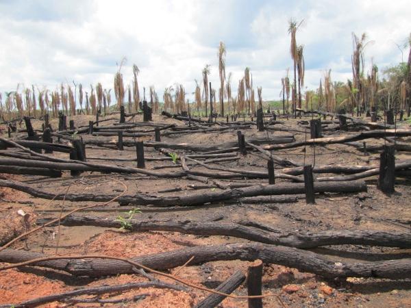écotourisme définition la forêt d'Amazonie
