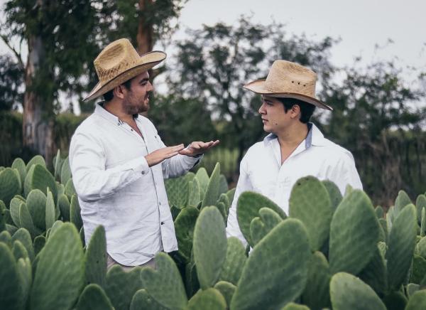 cuir artificiel de cactus dans la plantation