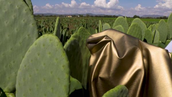 cuir artificiel de cactus technologies modernes et économiques