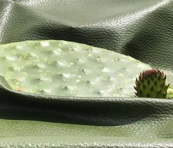 cuir artificiel de cactus une feuille mûre