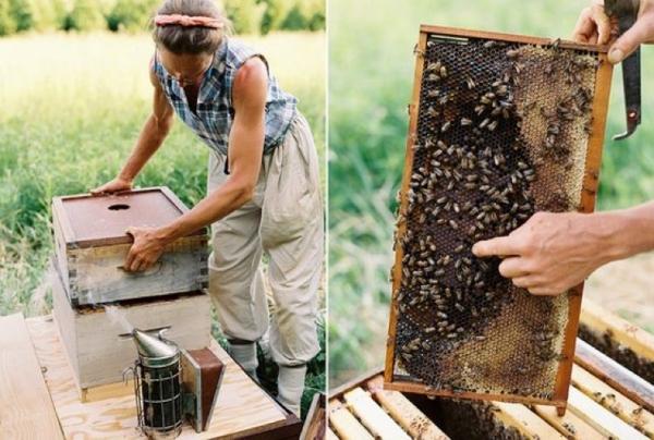gelée royale produit d'abeilles récolte