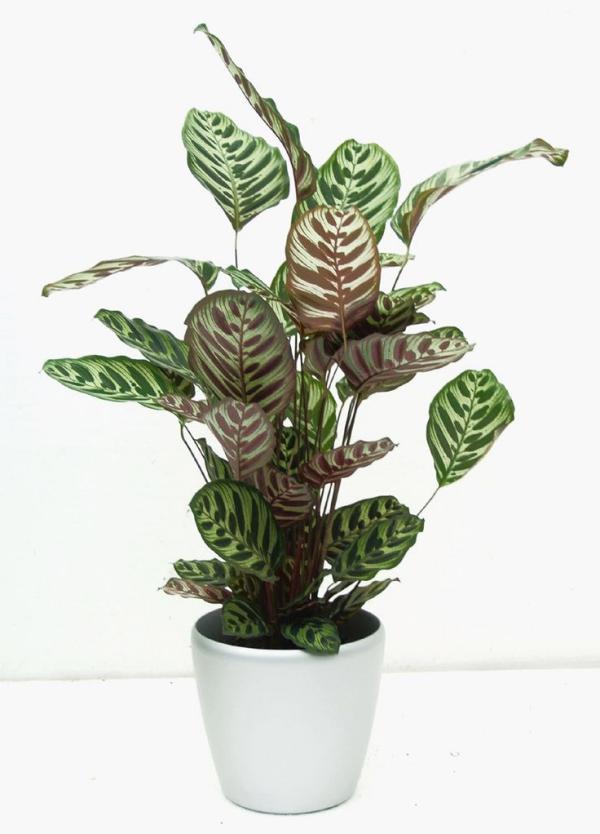 grandes plantes d'intérieur arroser fréquemment