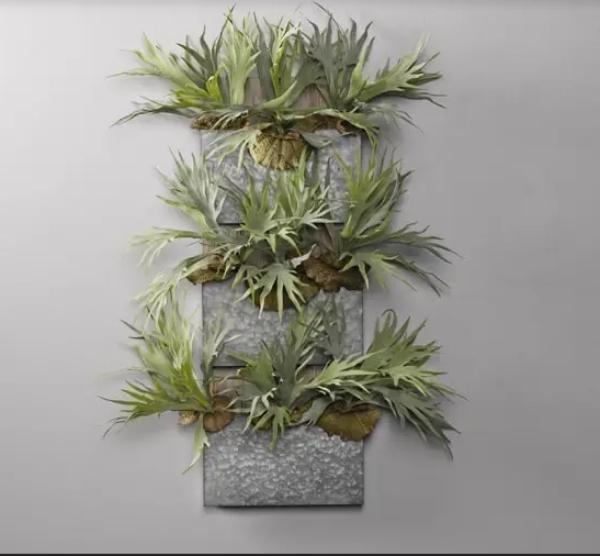 grandes plantes d'intérieur fougère staghorn