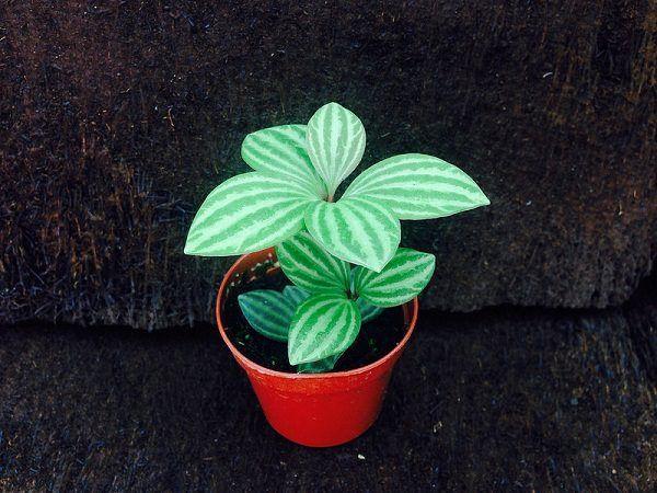 grandes plantes d'intérieur petite plante d'intérieur adorable