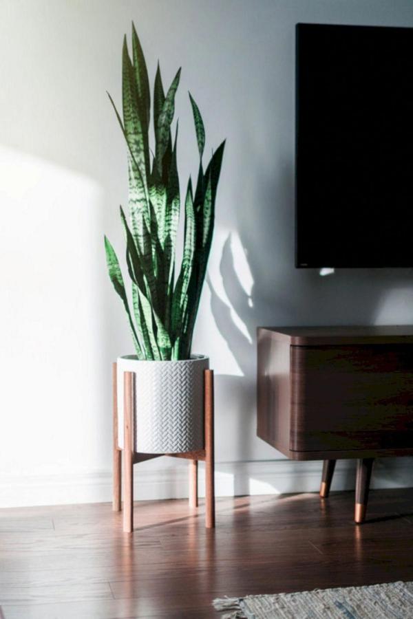 grandes plantes d'intérieur peu d'entretien