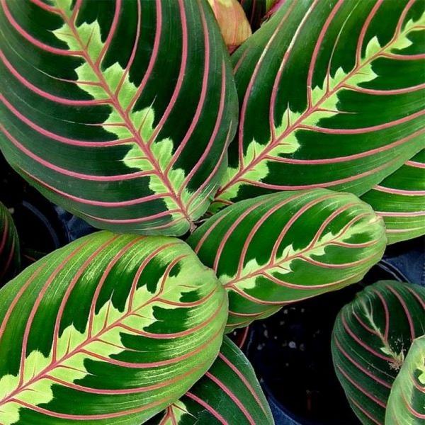grandes plantes d'intérieur plante tropicale