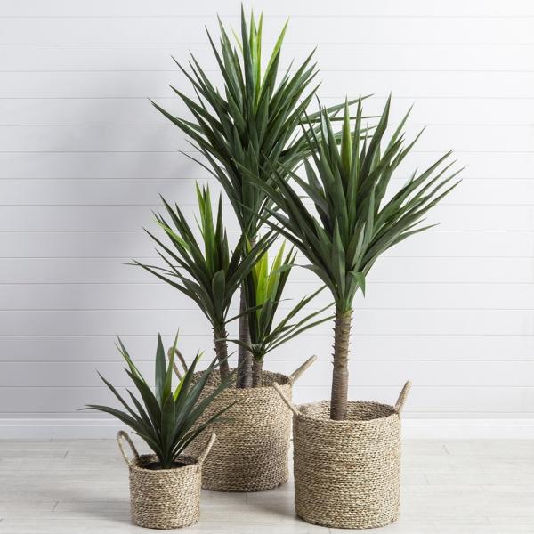 grandes plantes d'intérieur plante vivace arbustive