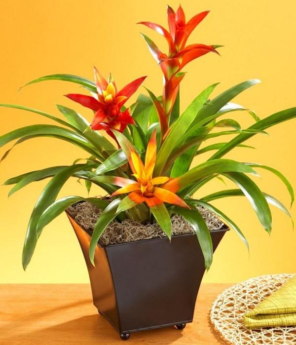 grandes plantes d'intérieur pousser à l'intérieur