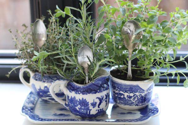 herbes aromatiques dans tasses à thé idée diy vaisselle ancienne