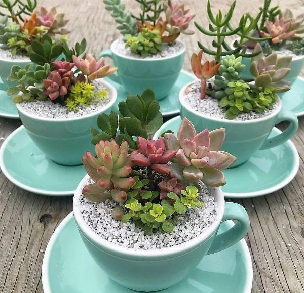 idée de cadeau unique vaisselle ancienne succulente dans une tasse à thé
