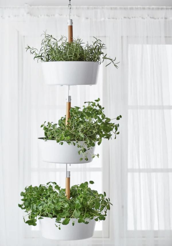jardiland plante intérieur avec petite cuisine