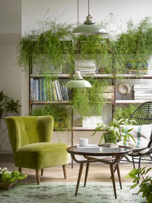 jardiland plante intérieur dans le salon