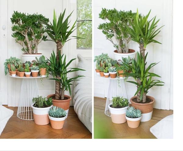 jardiland plante intérieur pots sur une table