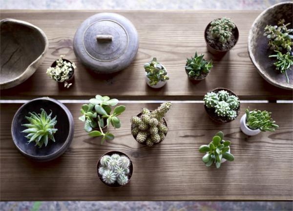 jardiland plante intérieur pour un espace minimaliste