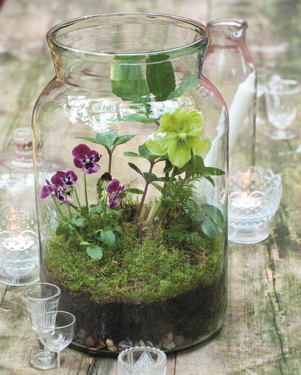 jardiland plante intérieur un terrarium mignon