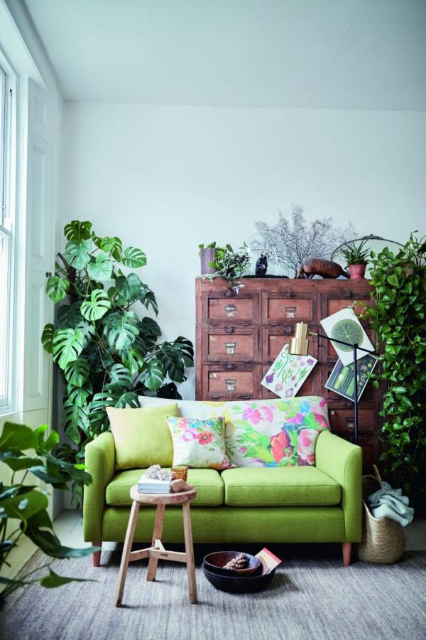 jardiland plante intérieur une bouffée d'air frais