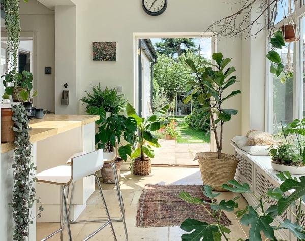 jardiland plante intérieur une grande cuisine