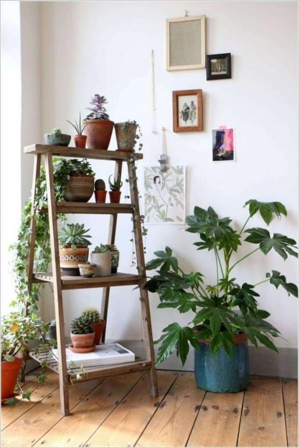 jardiland plante intérieur une vieille échelle
