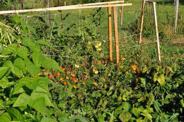 jardin écologique échelonnement ou la rotation