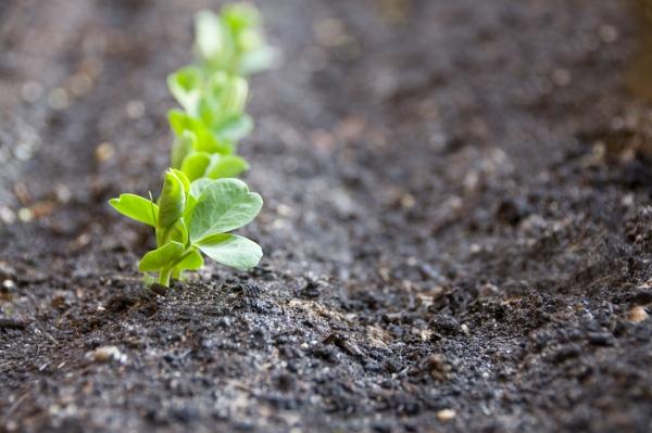 jardin écologique des plantes végétaliennes