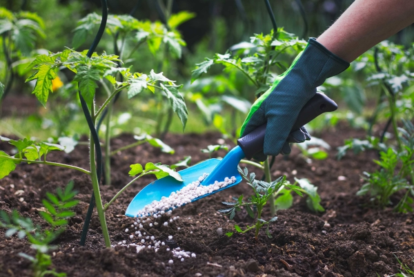 jardin écologique ne pas utiliser de pesticides