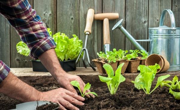 jardin écologique plante compagnon