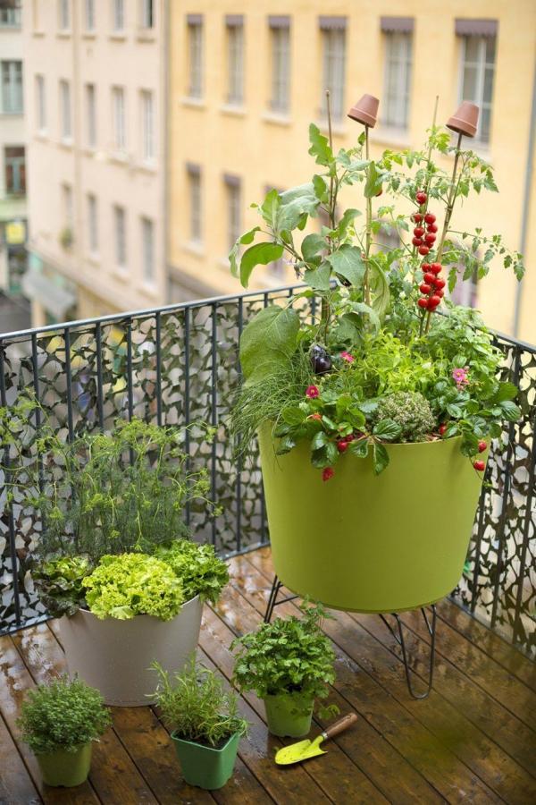 jardin écologique plantes en conteneur au balcon
