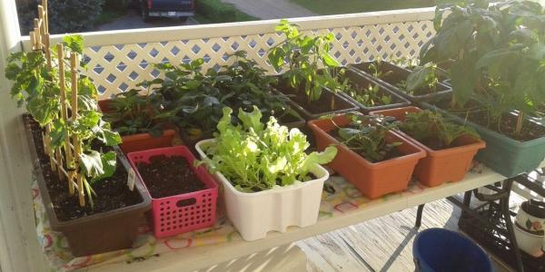 jardin écologique sur une table