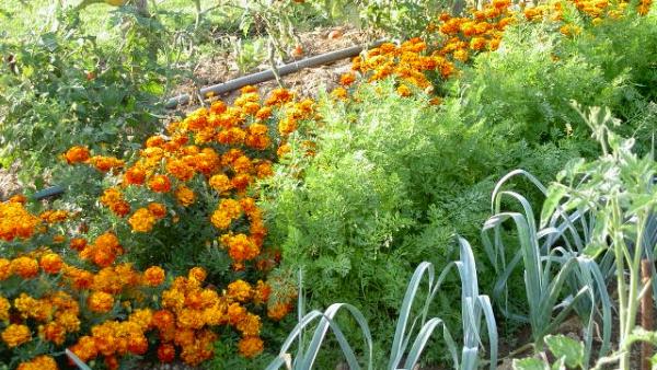 jardin écologique vivre en cohabitation