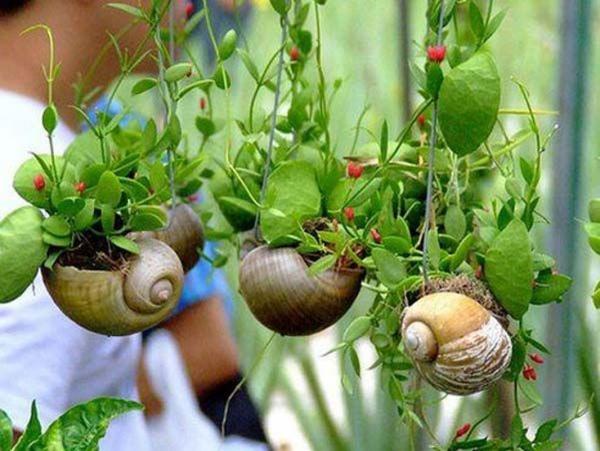 jardinière suspendue bricolage coquillages d'escargots
