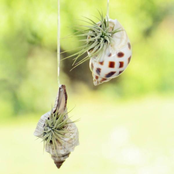 jardinière suspendue bricolage jolis coquillages
