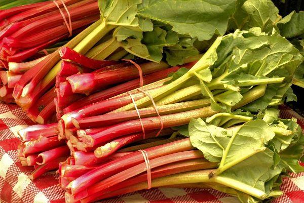 Comment planter de la rhubarbe : conseils pratiques ...