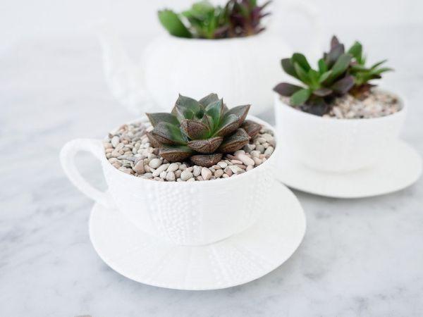 pot de fleurs à partis d'une tasse à thé idée vaisselle ancienne