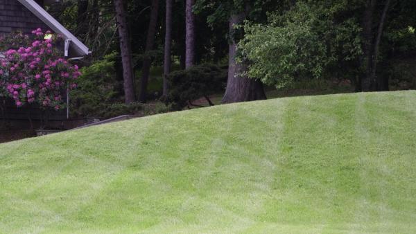 que faire en cas de piqûre de tique espaces verts traités